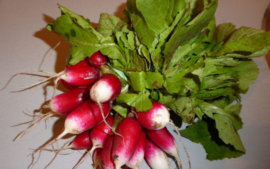 Comment utiliser  les fanes de radis en cuisine.